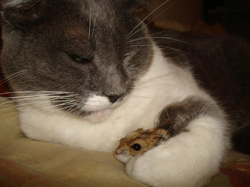 U a retr ctil convivencia entre gatos y otros animales - Peces para tener en casa ...