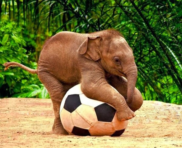 Funny animals of the week - 7 February 2014 (40 pics), baby elephant playing soccer football