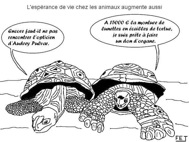 Dessin: les lunettes en écailles de tortue d'audrey pulvar