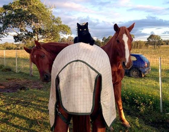 Kucing dan Kuda Kesayangannya