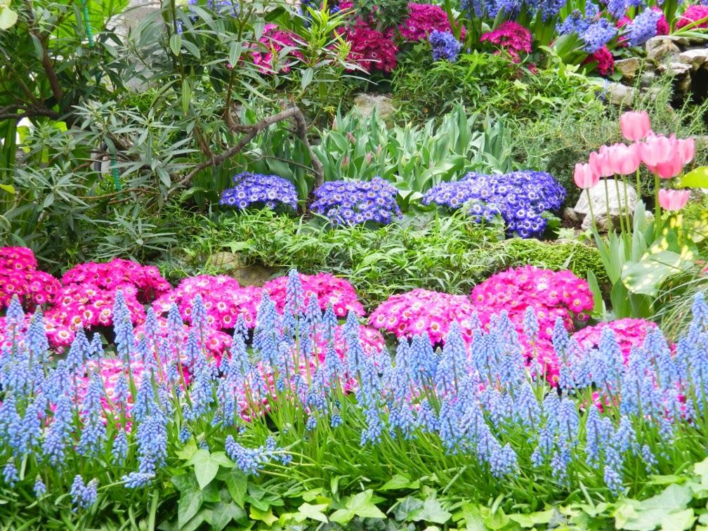 Muscari armeniacum Allan Gardens Conservatory Spring Flower Show 2014 by garden muses-not another Toronto gardening blog