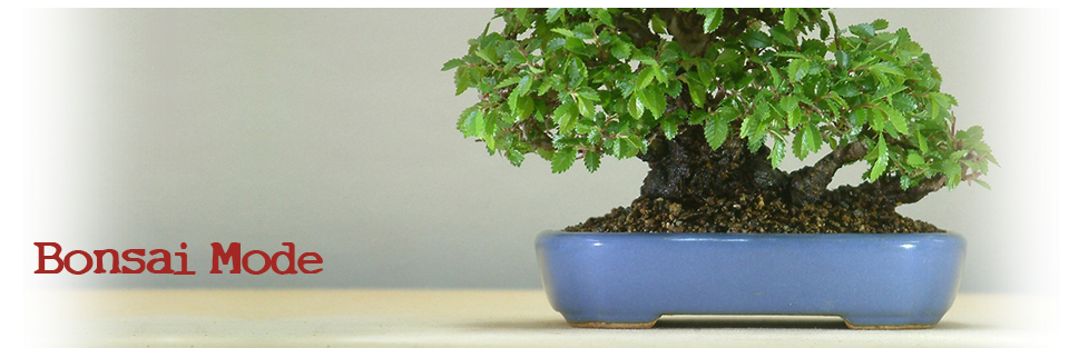 David Ruiz Bonsai Mode
