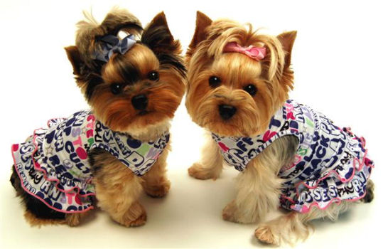 Everything Yours Dog Dresses
