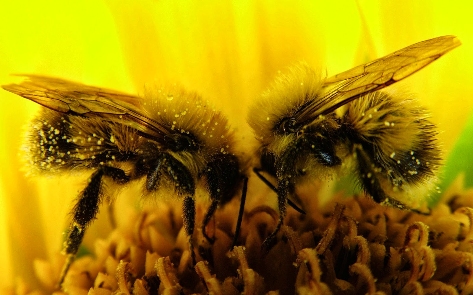 hd wallpapers desktop  insects hd wallpapers