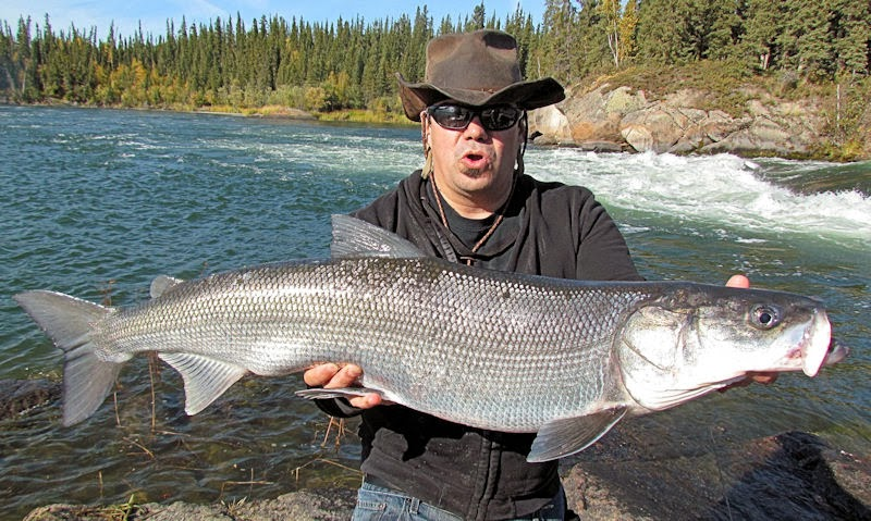 Big fishes of the world inconnu stenodus leucichthys for Biggest fish ever caught