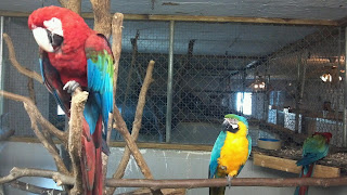 a red and blue parrot with a yellow and blue parrot