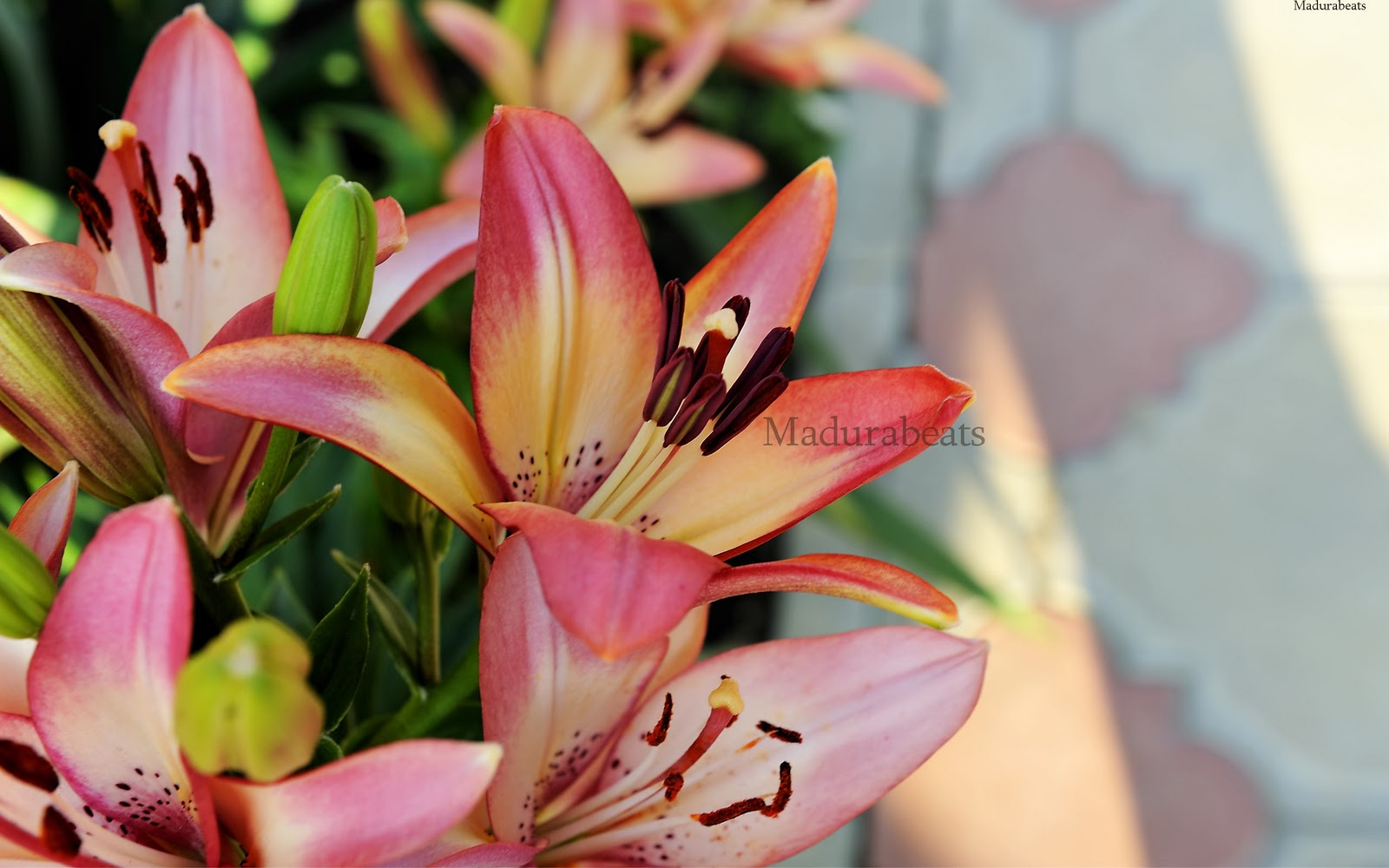 Flower images, Wide screen wallpapers,fresh flowers,Beautiful flowers,Western_red_lily_flower