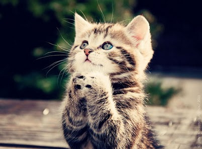 Little Kitten Praying