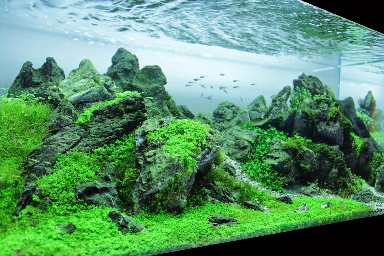 Aquascaping spain vall d 39 ar n by juan puchades - Aquascape espana ...