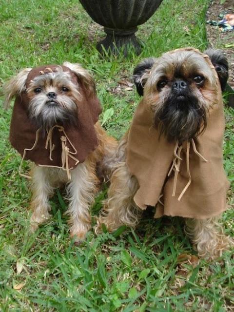 Perretes disfrazados de Ewoks