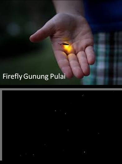 Mount Pulai ( Gunung Pulai Johor ) Firefly