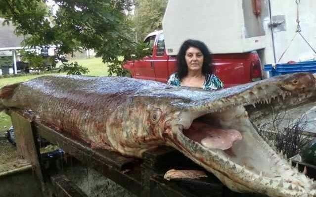 International fishing news video world 39 s biggest gar for Biggest fish in the world