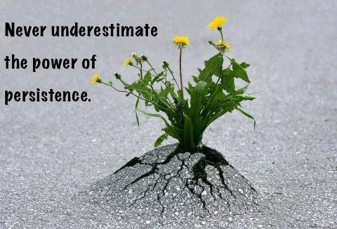 Never underestimate the power of persistence.