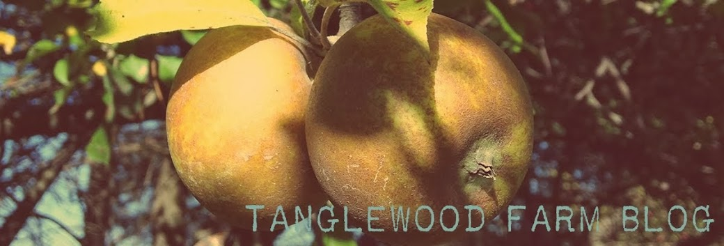 Tanglewood Farm - A Pinch of Something Nice