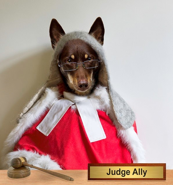 A dog judge Image credit: aussiegall, license Attribution 2.0 Generic (CC BY 2.0) Image source: https://www.flickr.com/photos/aussiegall/14083879693
