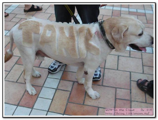導盲犬協會活動之TANK