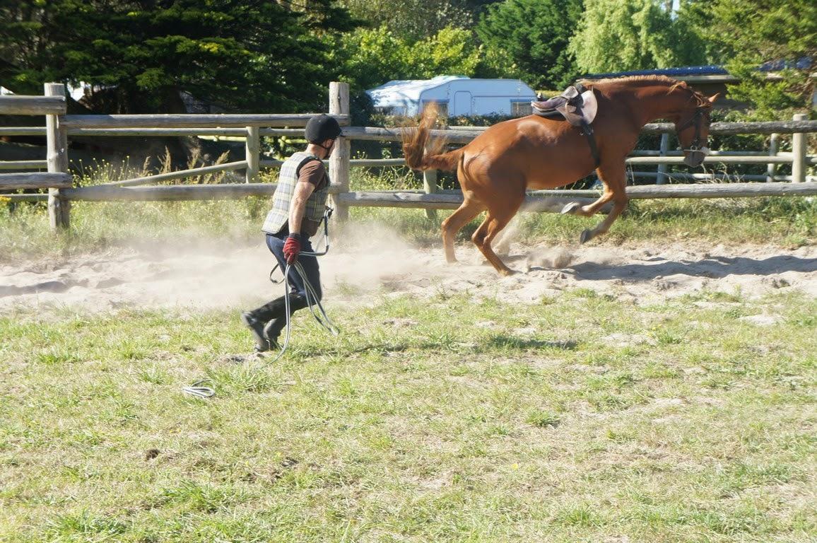 """Résultat de recherche d'images pour """"débourrage cheval"""""""""""