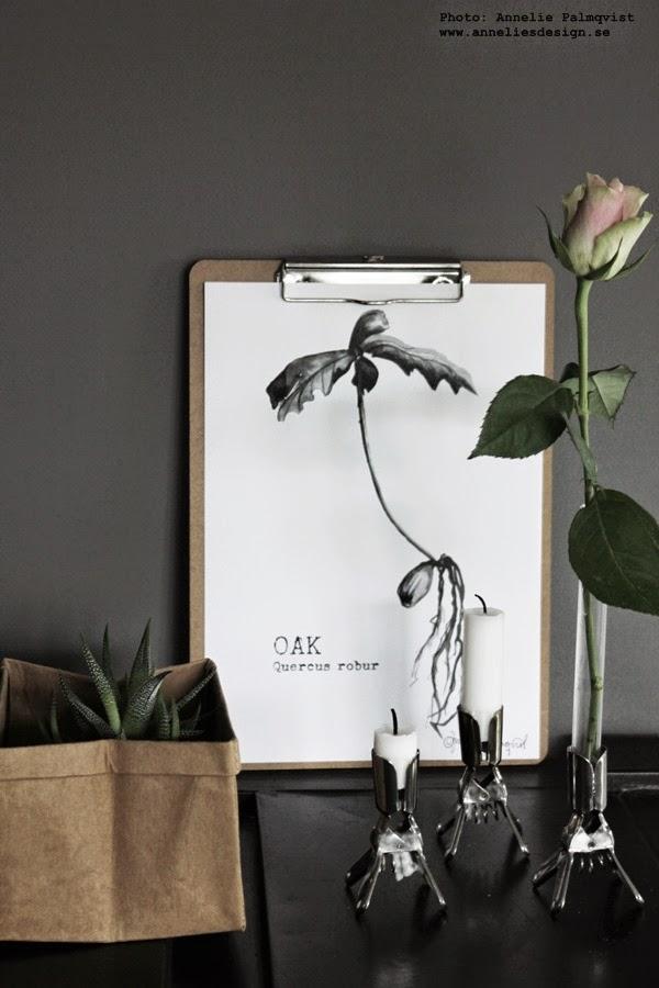 svartvit tavla, oak, konsttryck, ekollon, växter på tavla, tavlan med ekollon, ros, rosor, papperspåse, påse med kaktus, kaktusar, grå vägg, vägggar, grått, inredning, webbutik, webshop, webbutiker med inredning, inredningsblogg, blogg, bloggar,