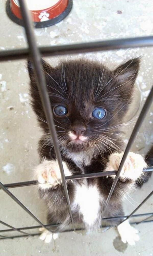 Funny cats - part 124 (40 pics + 10 gifs), cat picture, cute cat