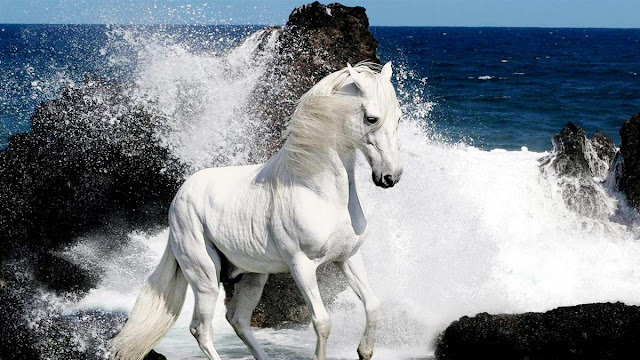 white_horse_sea_waves_wallpaper_hd