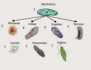 Defenisi Mikrobiologi dan Parasitologi