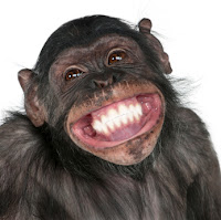 Crazy happy monkey smiling