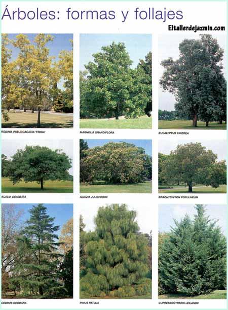 plantación de un árbol, follajes, arbustos
