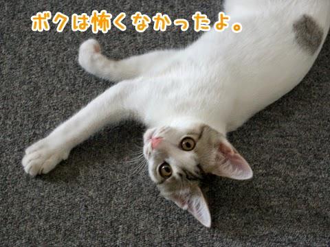 だらけている子猫
