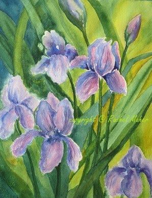 Cynthia's Irises