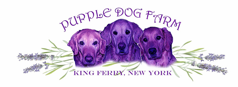 Purple Dog Lavender Farm