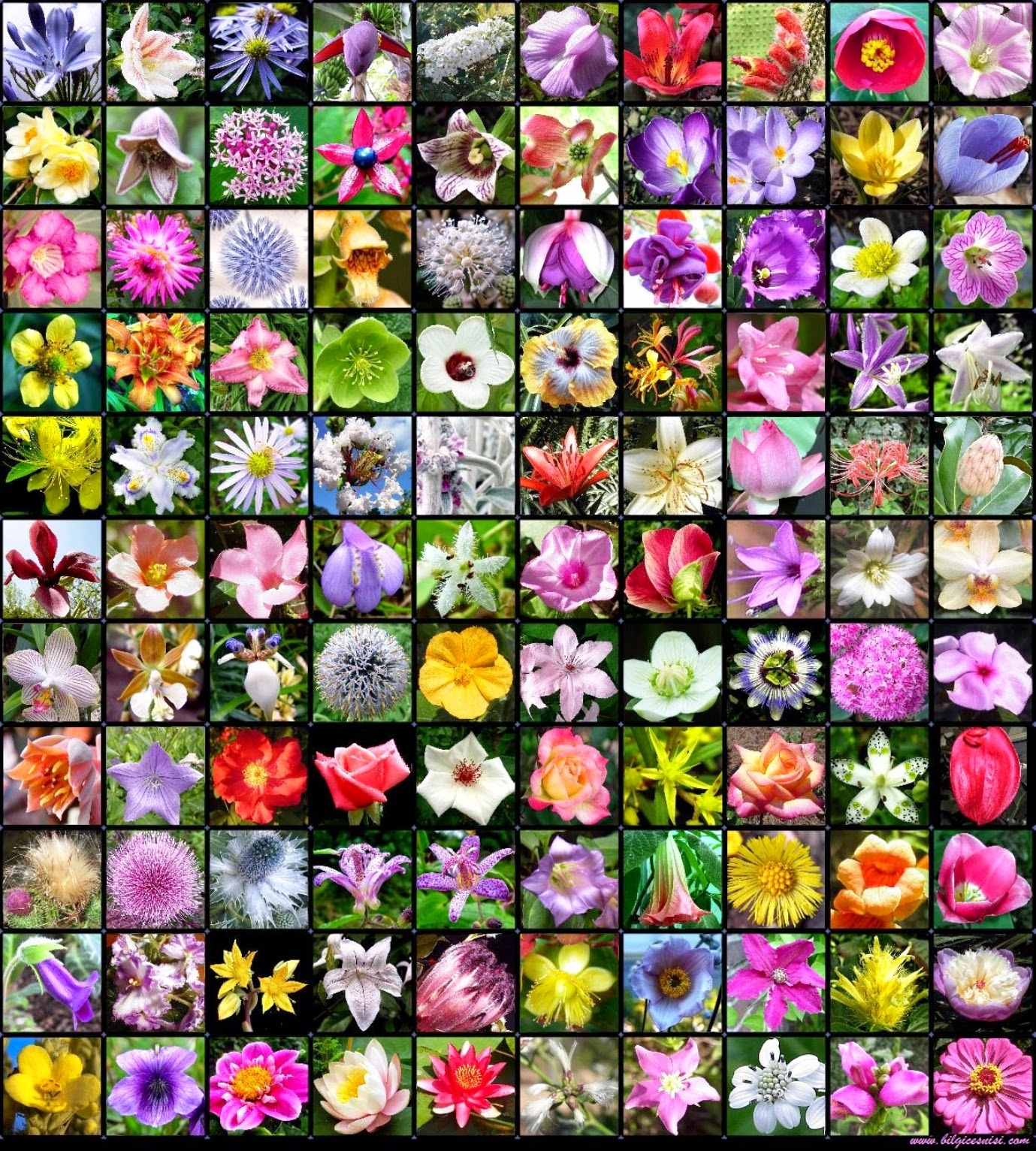Alphabetical Names Of Annual Flowers