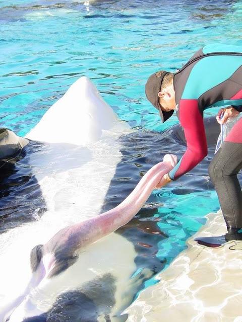 Balina sağlık ekibi veteriner havuz yunus memeli hayvan havuz görevlisi zor iş şartları mobbing balina penisi balina üreme organı