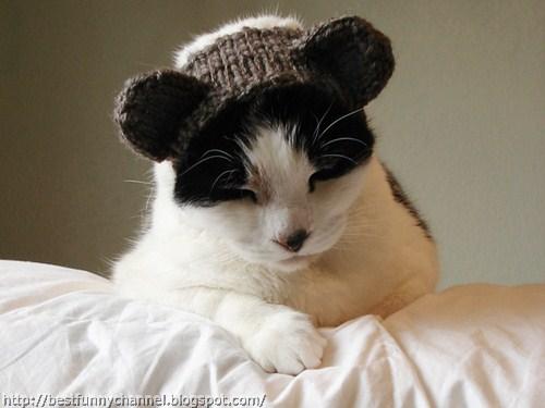 Cat in cap.