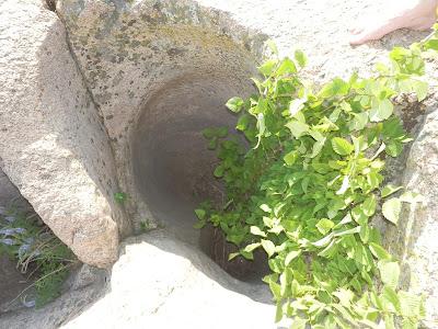 куст вырос внутри гранитного колодца на скале, Южный Буг, Мигея