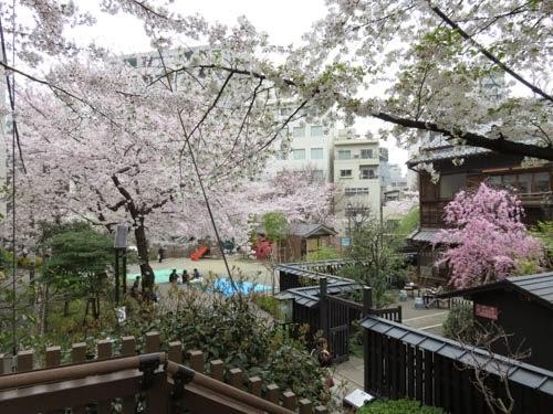 神田明神の桜10
