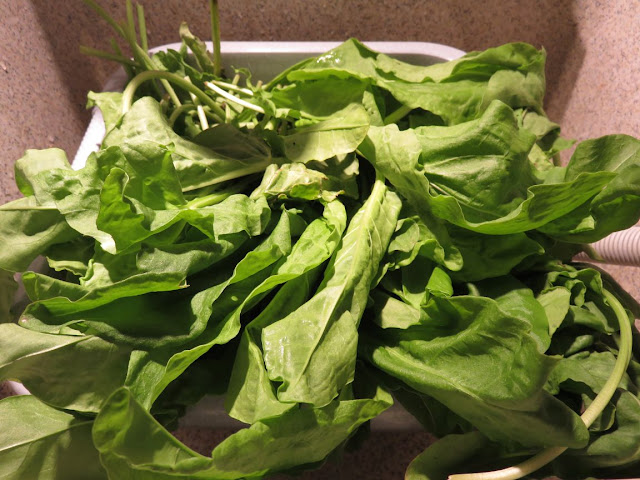 légumes bio d'un  producteur local sur le marché
