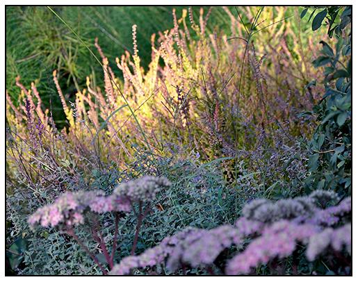 Fall Garden Inspiration