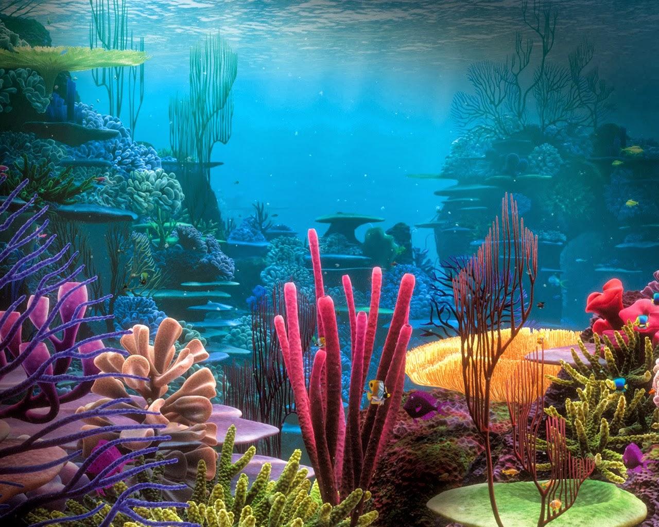 Fondos marinos imagui - Fotos fondo del mar ...