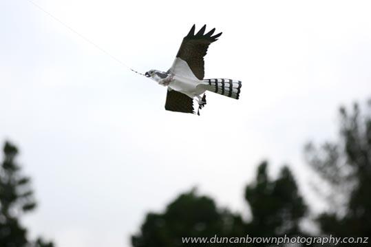 Scary bird photograph