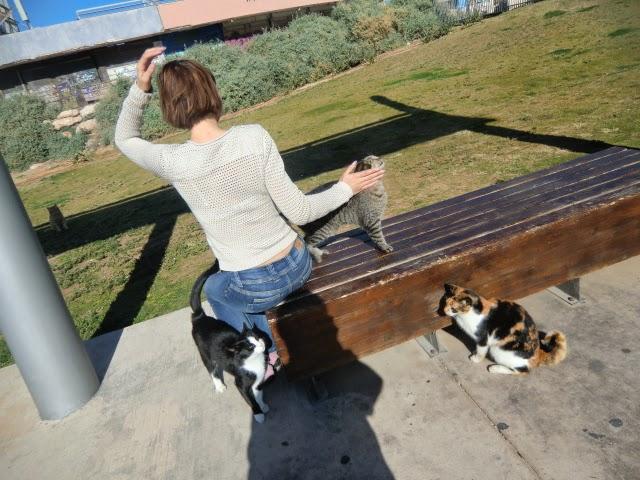 Коты-у-Здания-Взорванной-Дискотеки