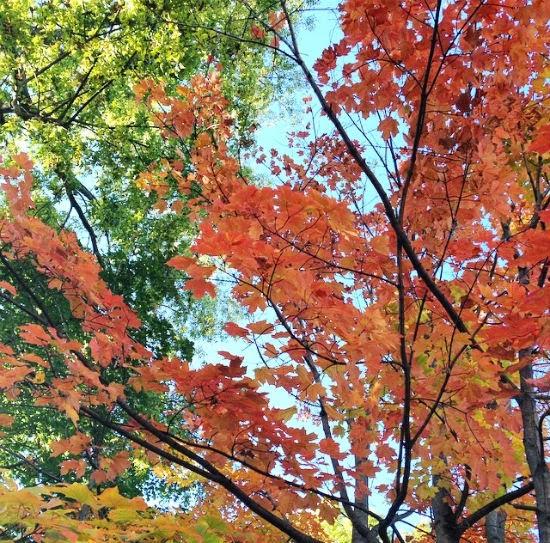 fall leaves in kansas city