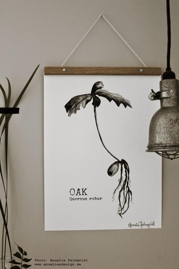 webbutik inredning, webshop, konsttryck, tavlor, svartvit tavla med ekollon, ekplanta, ek, plantor, växt, växter, träd, tavla, poster, posters, på väggen, inredning, konst, quercus robur,