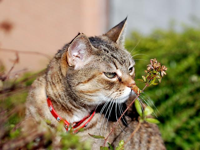 Il mondo in un giardino piante tossiche per i gatti for Piante velenose per i gatti