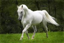 2014 - Ano do cavalo!