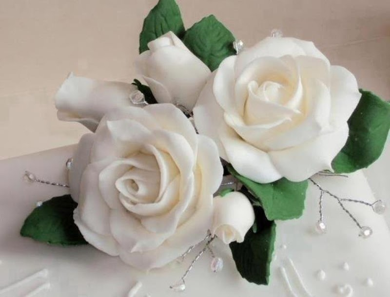 Most Beautiful White Rose Flowers Gift Images Wallpapers