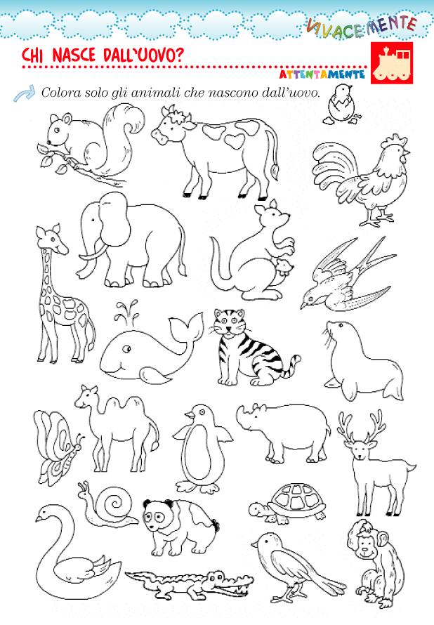Vivacemente il giornalino del cuore e della mente animali - Immagini di animali dello zoo per bambini ...