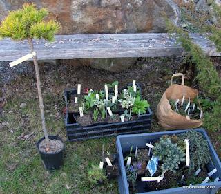 Plantor från Spezialplant