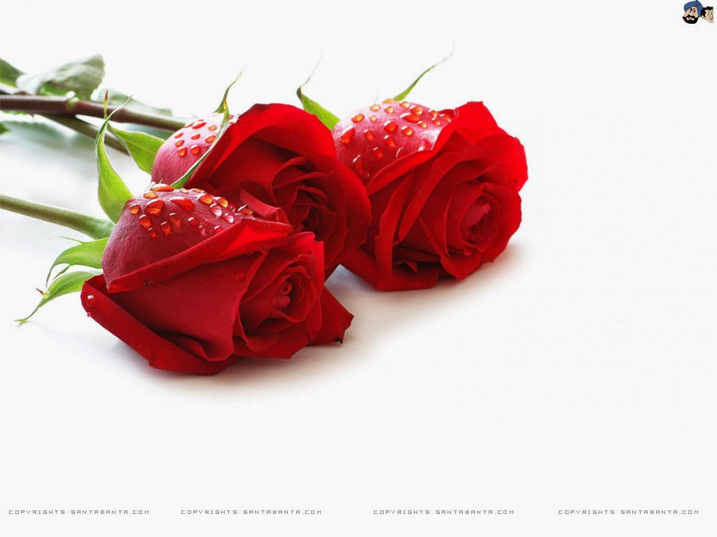 Good morning images with red roses