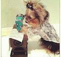 takav pas meni treba :)