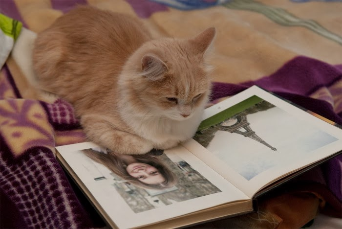 PhotoFunia Book Pages Photo Effects with Smart Kitty